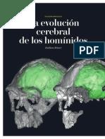 La Evolucion Cerebral de Los Hominidos Iyc 0212