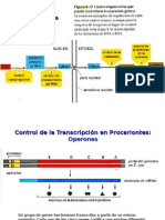 Control Transcripcion
