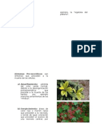 Sintomas y Signos Producidos Por rganismos Fitopatogenos.docx