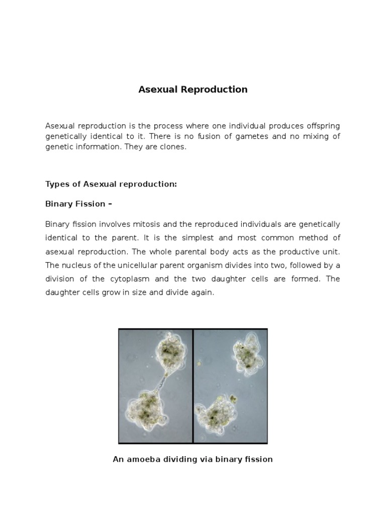 Cell division involved in asexual reproduction the offspring