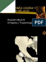 Anatomía Cadera y Anillo Pélvico
