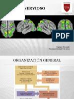 2013 Cerebelo y Gb Psicomotricidad