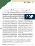 A Big Bang Model of Human Colorectal Tumor Growth