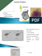 Practica de Amebas parasitos en su forma quistica o trofozait