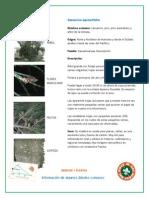 Informacion Arboles Comunes en El Estado de Mexico