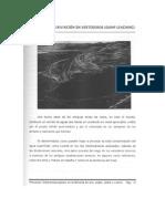 Capitulo4 Mineria de Lixiviacion en Vertederos (Dump Leaching)