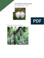 Centro de Origen de Plantas Del Peru 2015