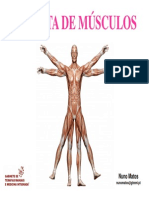 Musculos Coluna Abdomen