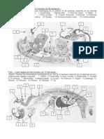 Practica Embrio Feto
