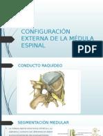 Configuración Externa de La Médula Espinal