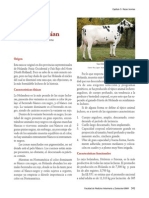 Holstein+Friesian