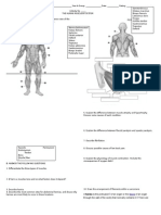 Muscular System Activity (1)