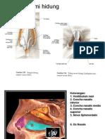 180198441 Anatomi Hidung Ppt