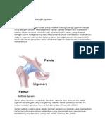 Anatomi Dan Fisiologi Ligamen
