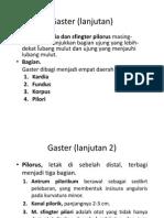 Traktus Gastrointestinal Bagian 2