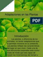 Adaptaciones de Las Plantasppt
