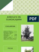 Arboles en Guadalajara