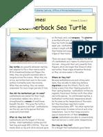 Kids Times Turtle Leatherback