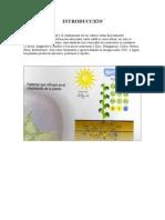 Fertilizacion Foliar en Vides[1]
