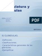 presentacion organos efectores en el cuerpo humano; glandulas y musculatura
