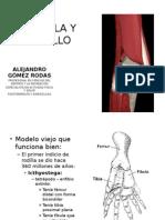 rodilla y tobillo, biomecanica o fisiologia articular