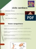 El Ciclo Cardiaco