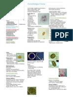 Resumo - Parasitologia Clinica