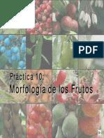 Clasificacion Frutos.pdf