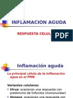 Ficha 06 UNIDAD 2 PATOLOGIA CELULAR v Inflamación Aguda. Respuesta Celular y Evolucion