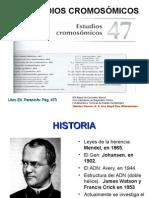 53_ESTUDIOSCROMOSOMICOS_47
