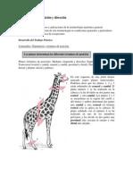Guia Terminologia anatómica