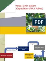 Manfaat Ekstrak Buah Delima Putih untuk Menghambat Keputihan.pptx
