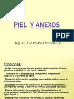 Piel y Anexos Tm 2015
