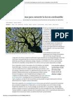 Fotosíntesis_ El Secreto de Las Plantas Para Convertir La Luz en Combustible _ Ciencia _ EL PAÍS