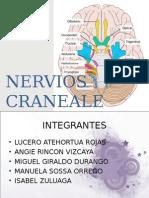 Nervios Craneales ( I-VI )