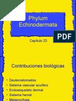 Echinodermos