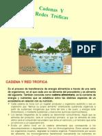 Diapositiva Cadena y Redes Troficas