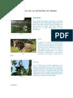 Animales de La Reserva de Manu