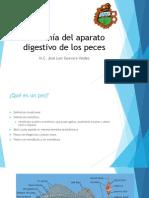 anatomia deaparato digestivoen peces