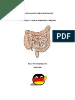Intestinum Tenue Et Intestinum Crassum
