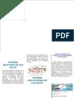 TRIPTICO DE LOS PECES.docx