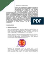 Informe 1_Desarrollo Embrionario y Fetal