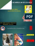 Anatomia Nasal II