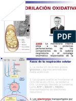 14) Fosforilación oxidativa