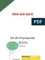 Hình ảnh bài 6.pdf