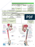 2.01 Gross Anatomy Trans - AM Thigh, AL Leg and Dorsum of Foot Tables of Muscle Groups