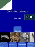 superclasehexapoda