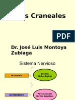 74.a Pares-Craneales  - Dr. Montoya.ppt