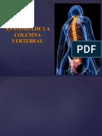 columna vertebral lineas lo importante.ppt