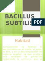 Microbiologia Bacillus Subtillis